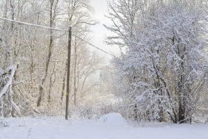 Peispimaa talv ja lumine mets