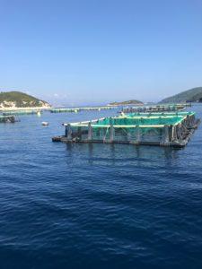 Peipsimaa Horvaatia õppereisi koostööfoorumi kalafarmid