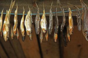 Peipsimaa kalatoodete märgistamine